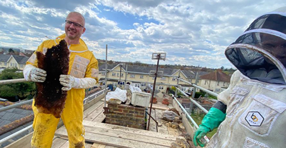 David Hasler at his first live bee removal.